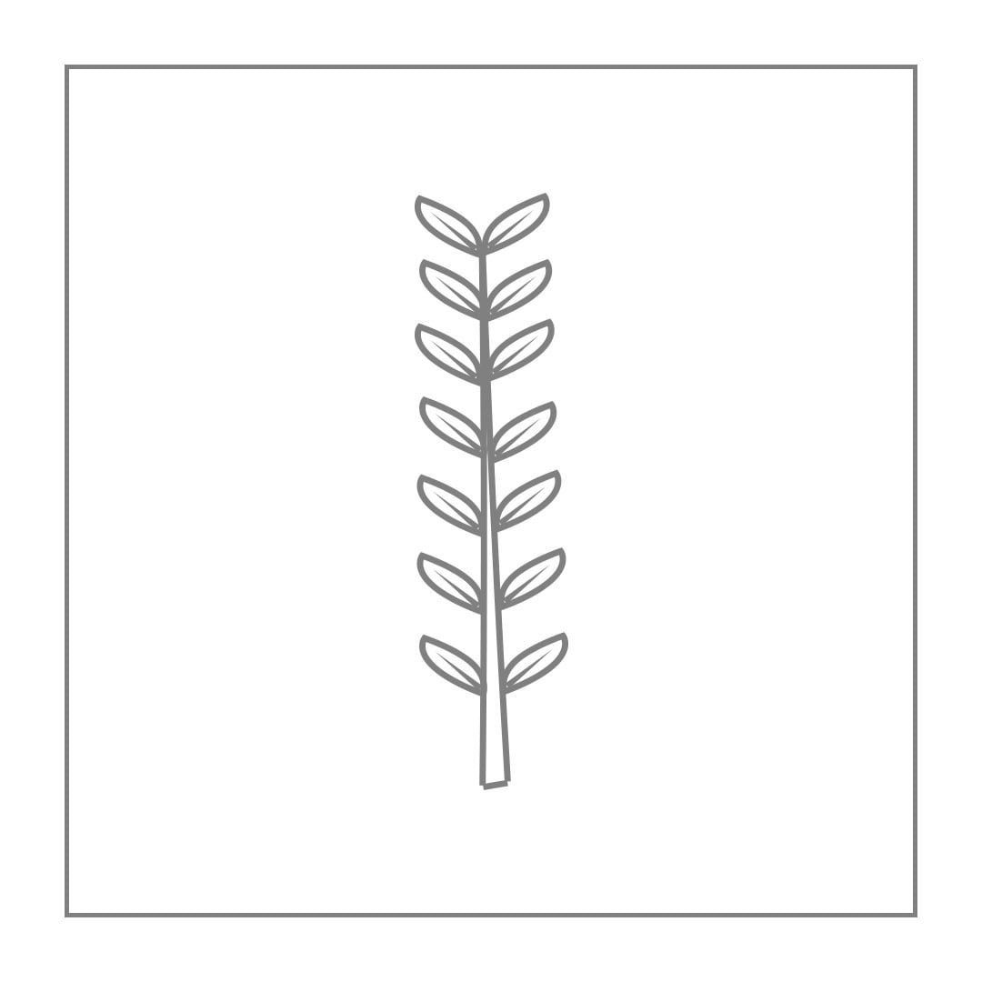 Eucalyptus Parvifolia 3