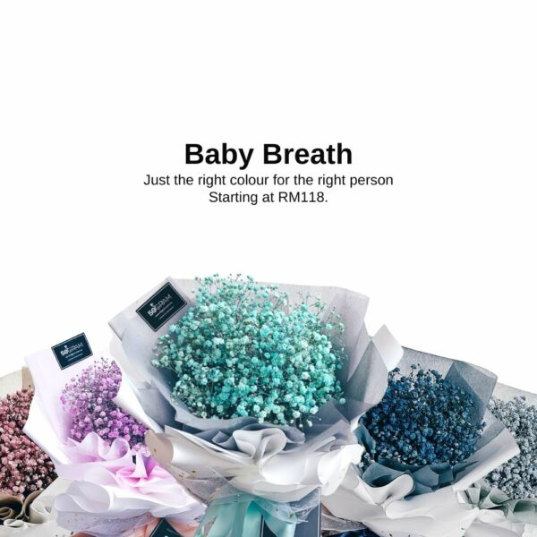 baby breath new series landing