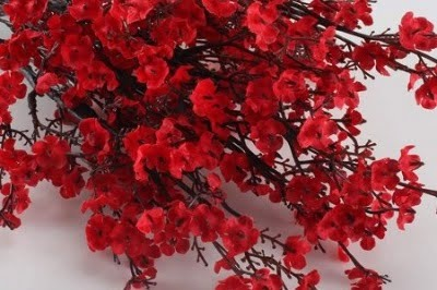 Baby Breath Red