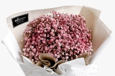 baby breath colour pink