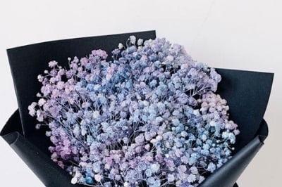 baby breath colour purple