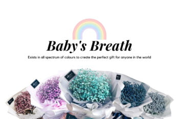 babys breath 1